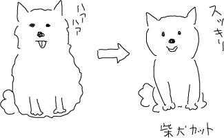 柴犬カット